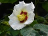 another white flower